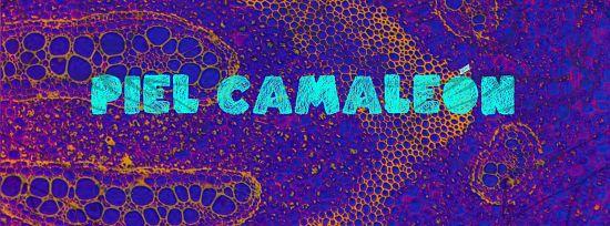 Piel Camaleon, Imagenes de Bandas de Metal & Rock Colombianas
